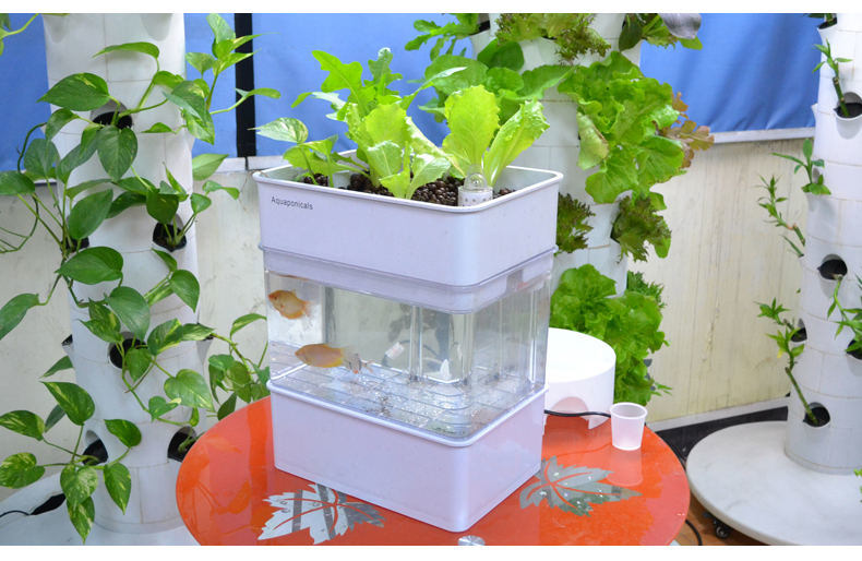 Self-Cleaning-Fish-Tank-Indoor-Kitchen-Herb-Garden-Aquaponics-Organic-Aquaponics-System.jpg